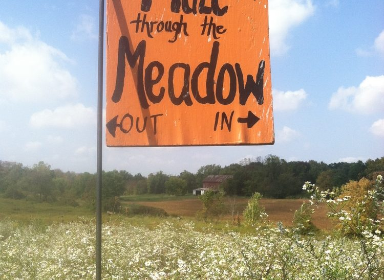 The Meadow Maze